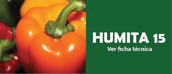 Humita